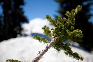 Mt. Rainier, Washington